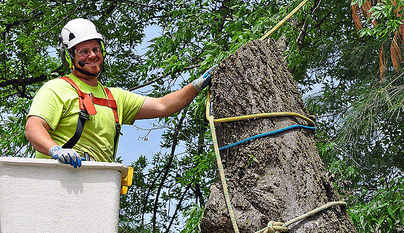 Tree Pruning – What You Should Know